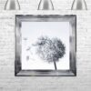 Dandelions - Blowing Left - Chrome Frame - Mounted