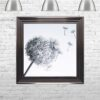 Dandelions - Blowing Right - Metallic Frame - Mounted