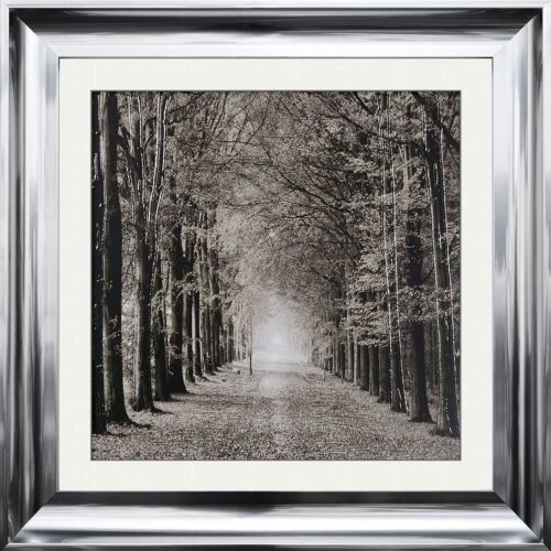 Path Ahead - Tree Walk - Scoop Frames