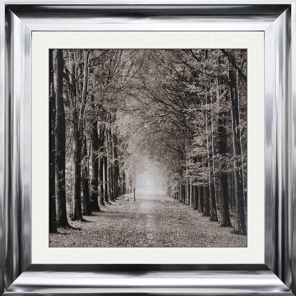 Path Ahead - Tree Walk - Scoop Frames
