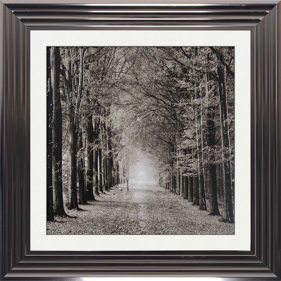 Path Ahead - Tree Walk - Metallic Frames