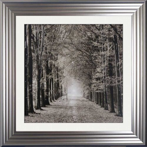 Path Ahead - Tree Walk - Silver Frames