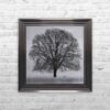 A Winter's Tree - Winter Tree - Metallic Frame - Mounted