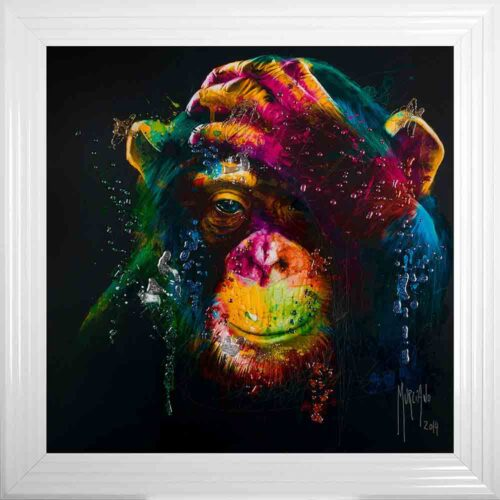 Darwin - Chimp - Chimpanzee - Black Background - White Frame